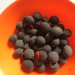 Gambar-buah-asam-keranji